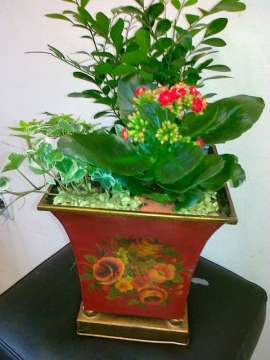 Комбинация саксийни цветя