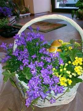 Кошница саксийни цветя