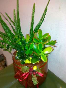 Сукулентни ( сухоустойчиви цветя