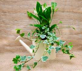 Аранжировка саксийни цветя