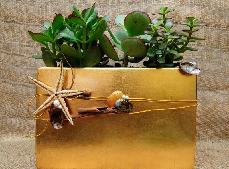 Succulent  ( drought resistant)