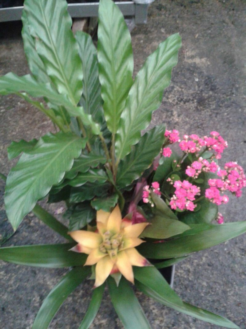 Potted flowers in basket