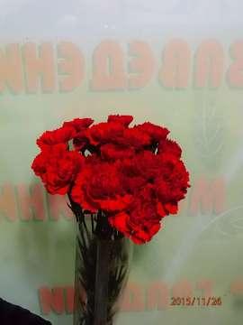 Carnations   20pc