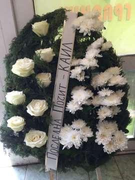 хризантема рози